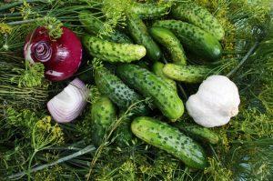 Spreewald cucumbers